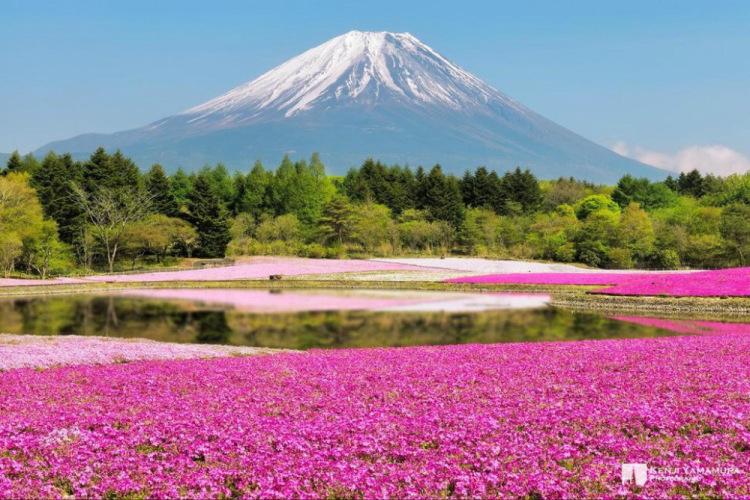 фотографий самых красивых цветов