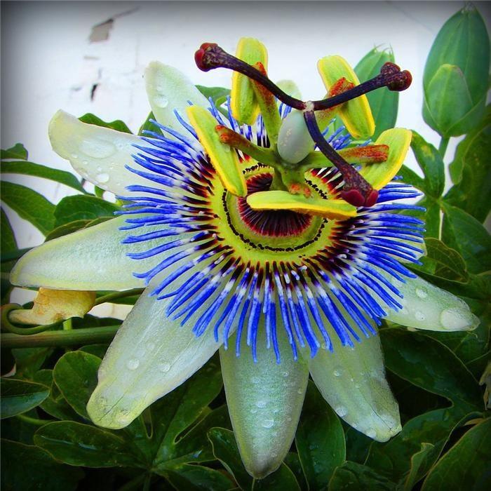 Красивое необычных цветов