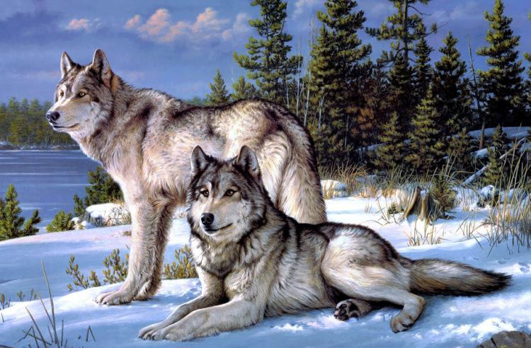 заставку на рабочий стол волки
